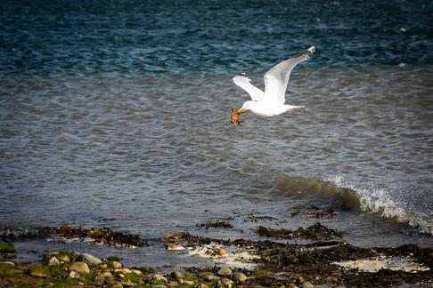 © Yakir Zur, Chanonry Point, Scotland