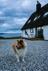 © Yakir Zur, George, Rough CollIie, Isle of of skye, Scotland