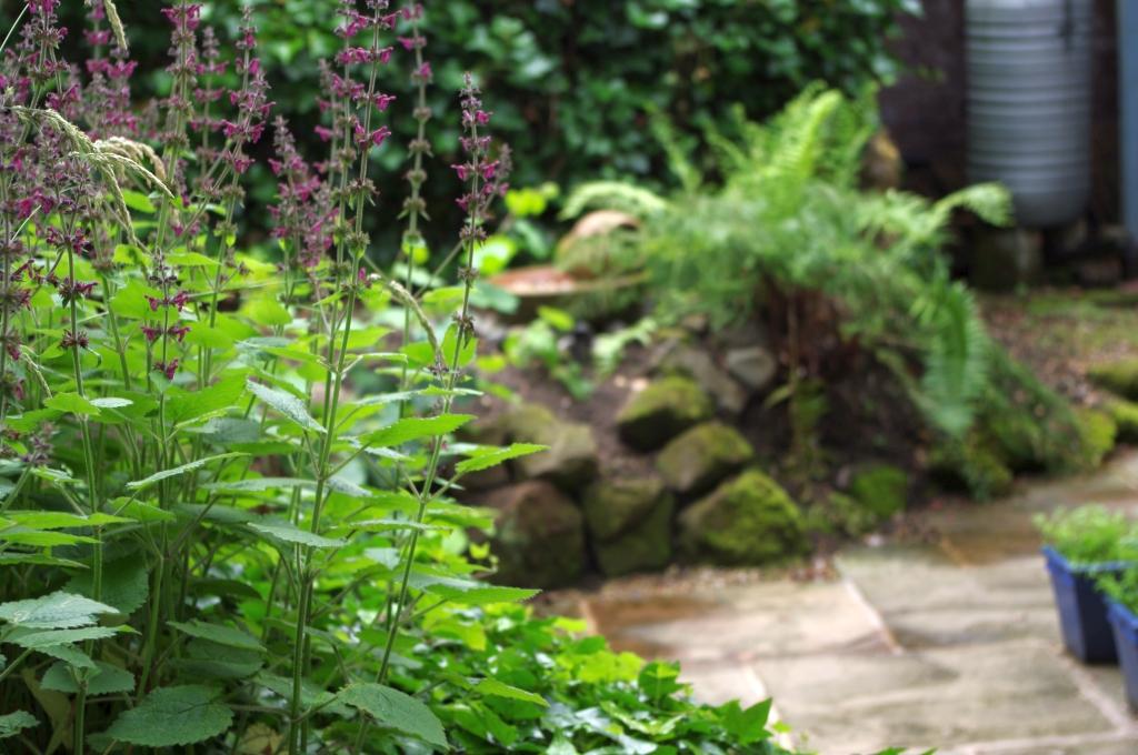 stwcb-garden2016-13