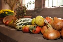 stwcb-harvest2015-18