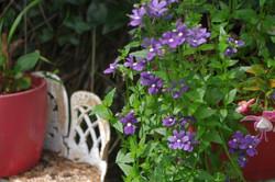 stwcb-garden2016-68