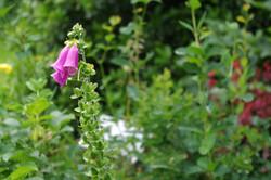 stwcb-garden2016-44