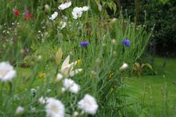 stwcb-garden2016-31