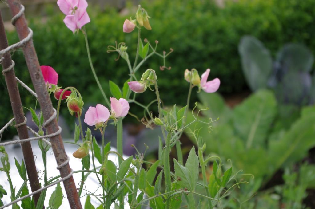 stwcb-garden2016-40