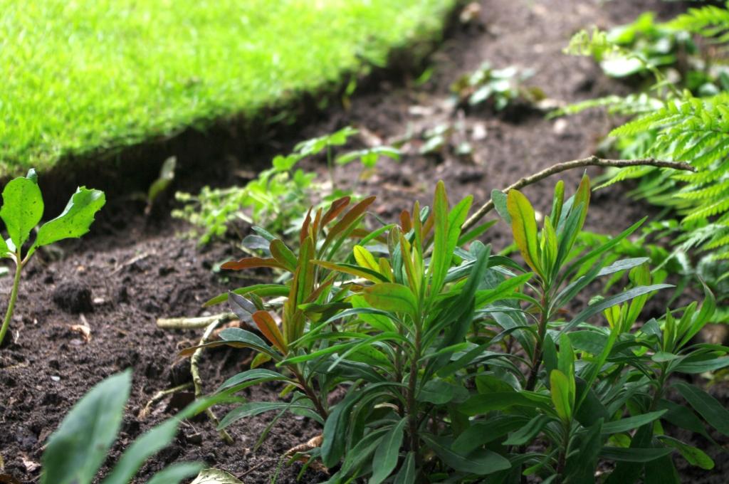 stwcb-garden2016-08
