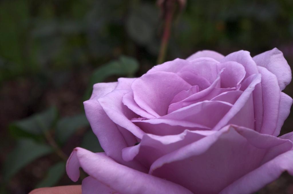 stwcb-garden2016-36