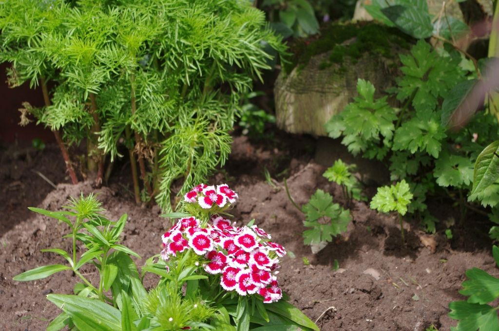 stwcb-garden2016-18
