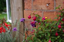 stwcb-garden2016-61