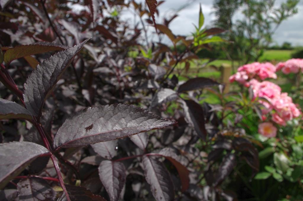 stwcb-garden2016-07