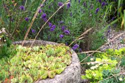 stwcb-garden2016-67