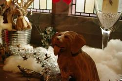 stwcb-christmas2014-33