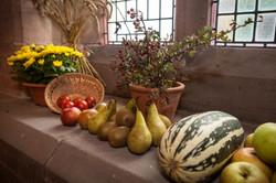 stwcb-harvest2015-19