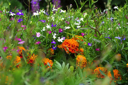 stwcb-garden2016-50