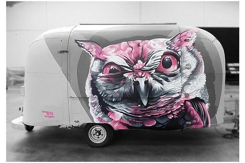 'A owl'