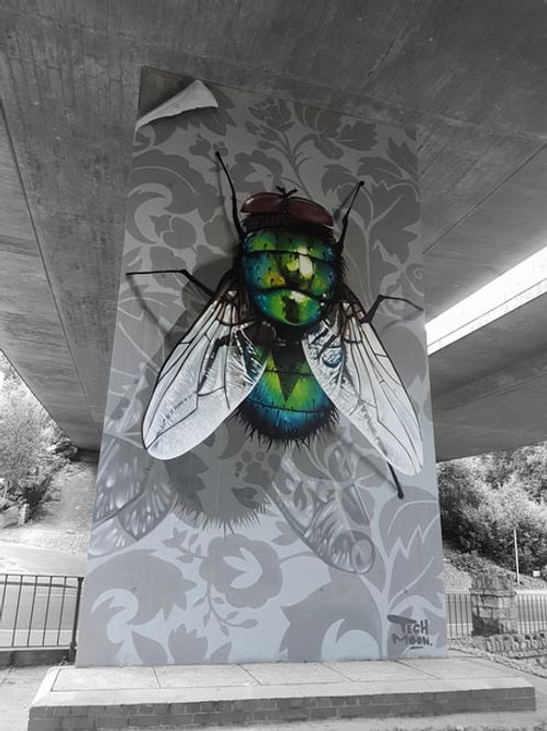 'Fly on the Wall'