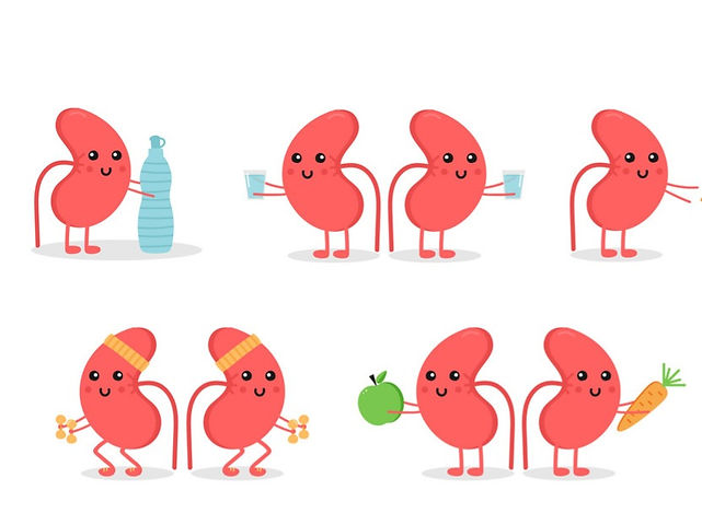 cartoon-doodle-kidney-characters-vector-20012323_edited.jpg