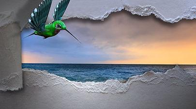 hummingbird-3347576__480.jpg