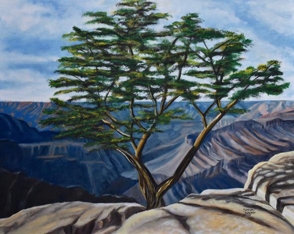 Canyon Conifer
