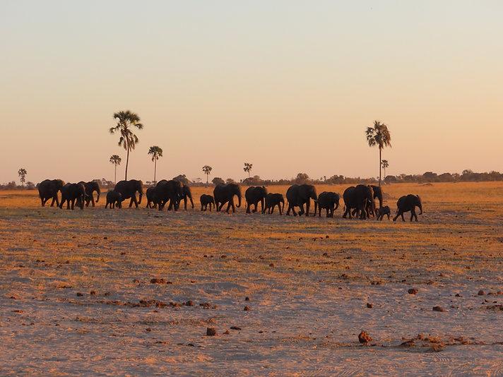 Elephants-Hwange.JPG