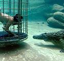 Crocodile-Cage-Diving-in-Victoria-image-
