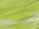 Зеленые цвета пленки арт.sf504