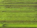 Зеленые цвета пленки арт.sf102
