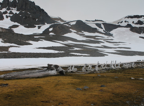 A Antártica tem dono? | Tratado Antártico