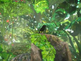 songbird-feat2.jpg