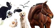 maus-tratos-aos-animais-o-que-voce-sabe-