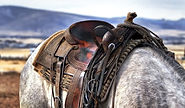cuidados-com-sela-para-cavalo.jpg