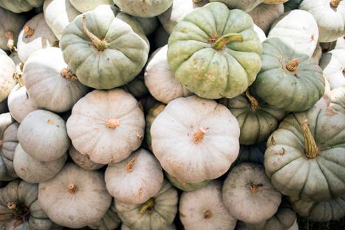 PumpkinLotSelects_001.JPG