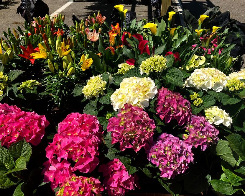 Flowers_007.jpg