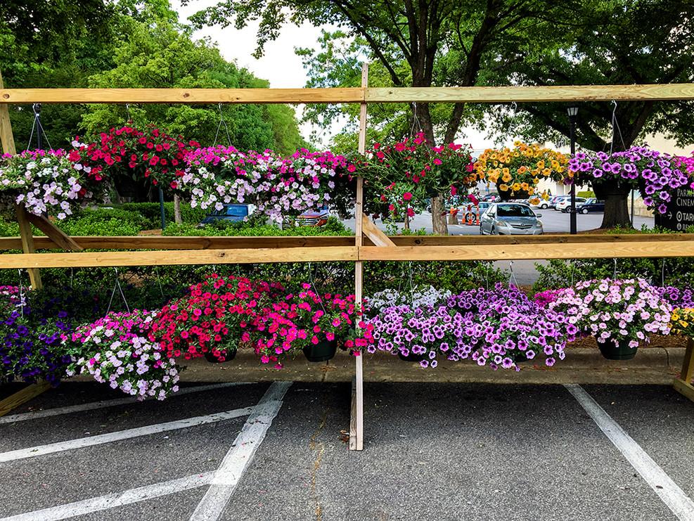 FlowerLotSelects_003.JPG