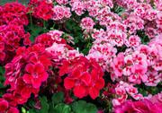 FlowerLotSelects_006.JPG