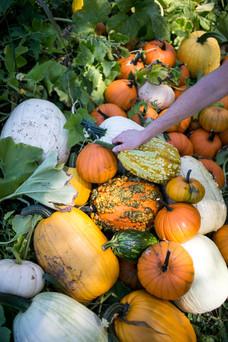 FarmSelects_Pumpkins_005.JPG