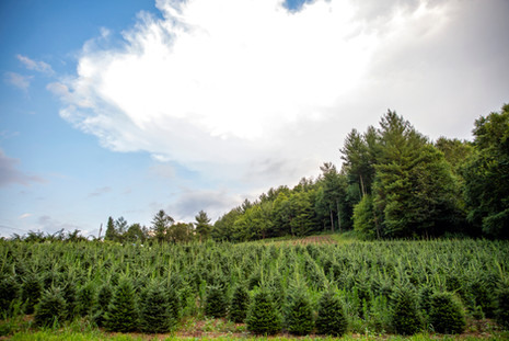 FarmSelects_Trees_003.JPG