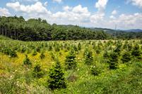 FarmSelects_Trees_007.JPG