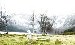 Tajga at Vassdalsvik
