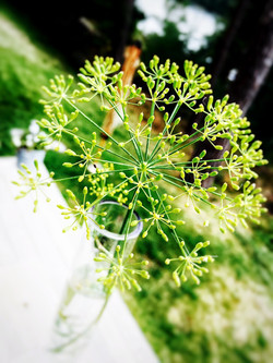 Dill - what else!