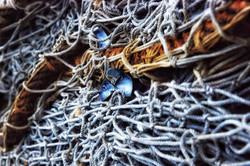 An old fishing net at VSL