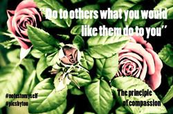 Quote Principle of compassion