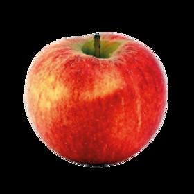 Pommes Gala Star