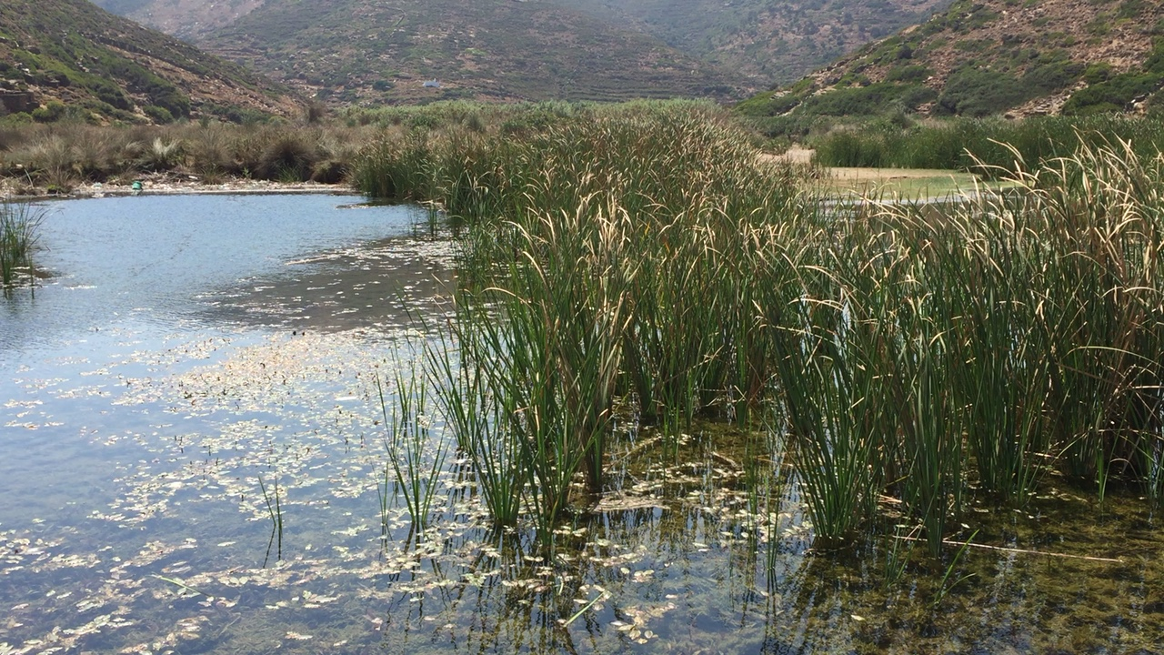 Wetlands off Lefki beach