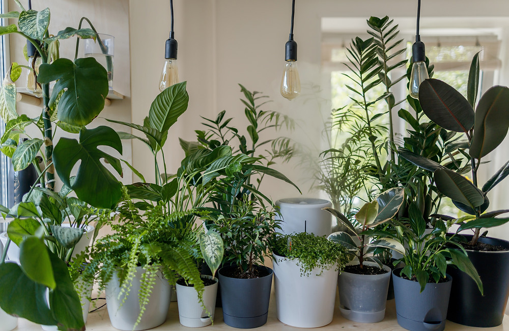 Indoor plant collection in various posts and sizes
