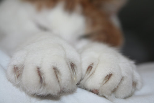 Joes Paws