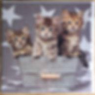 AE8FC02B-3671-4AD4-BD8F-76208A260FC3.jpe