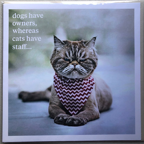 Cats Have Staff Card