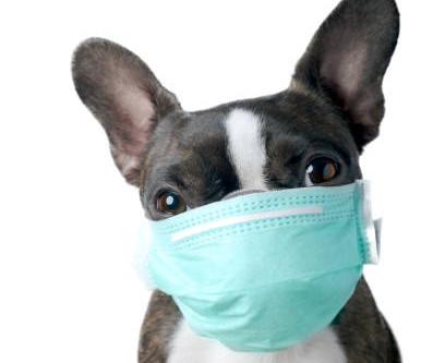 Can dogs catch Coronavirus?