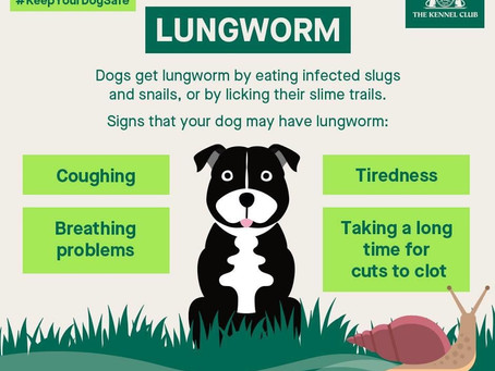 Lung Worm