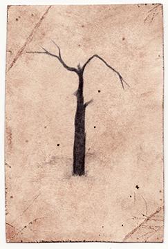 Antler Tree, 2009